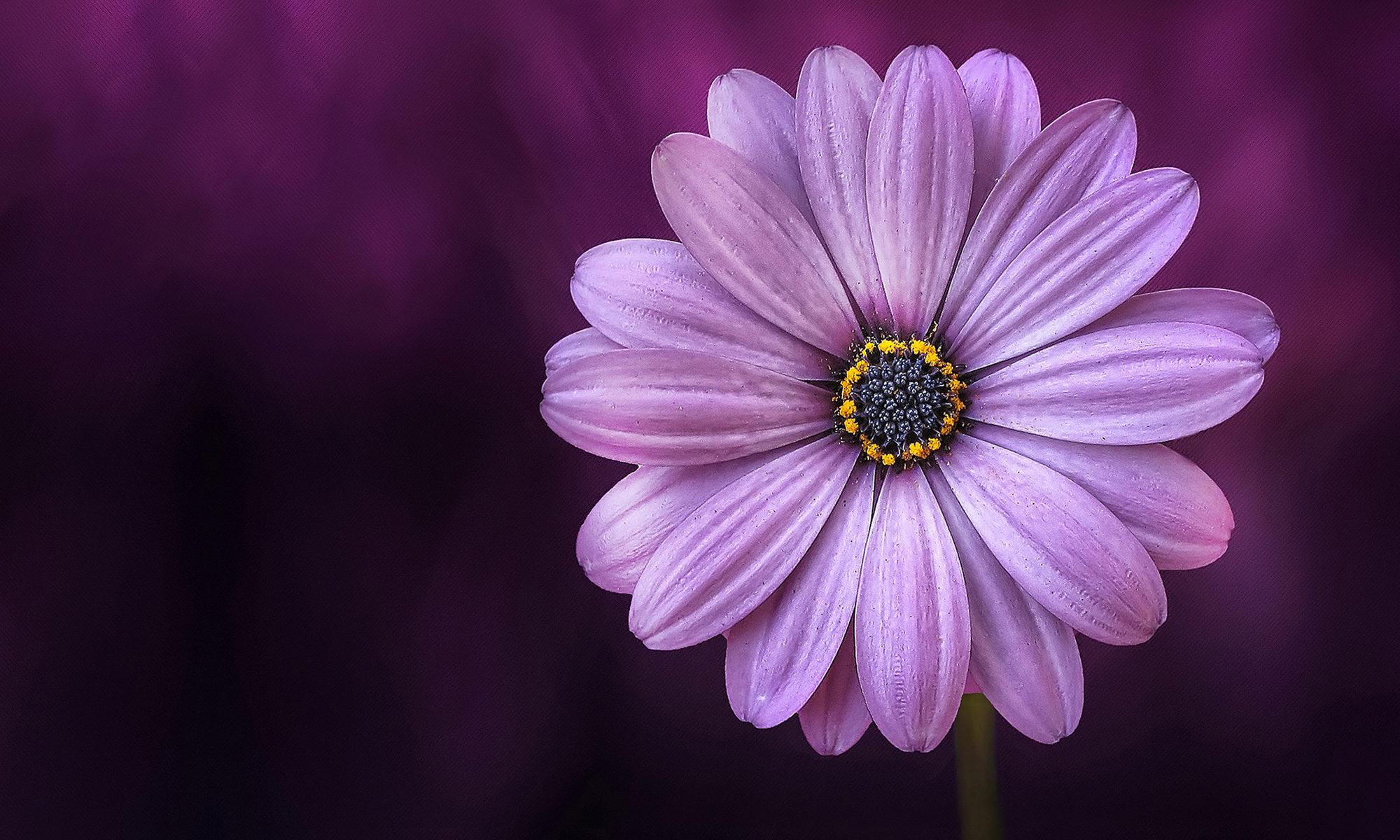 Seimei Flower
